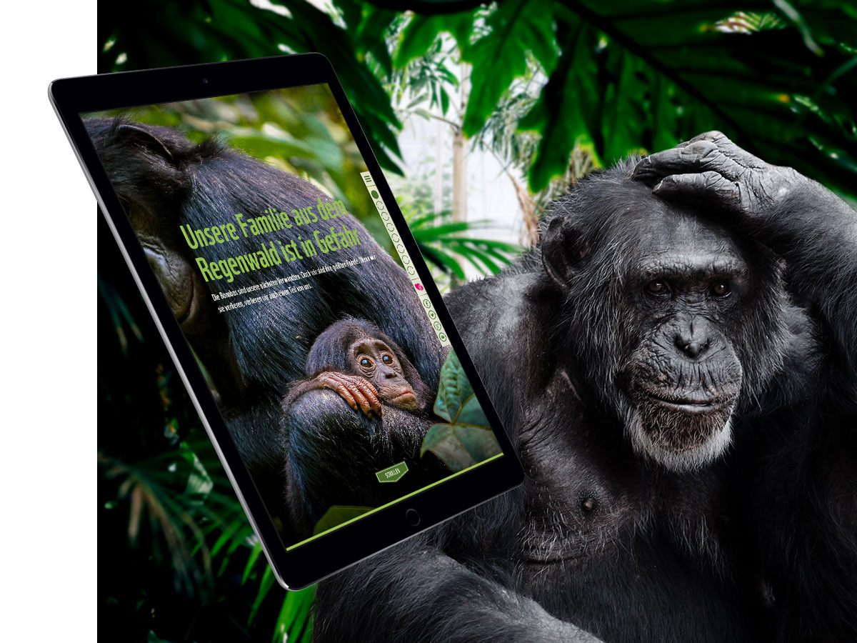 WWF_Teaser